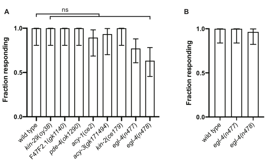 Role of EGL-4 in male reproduction of C. elegans