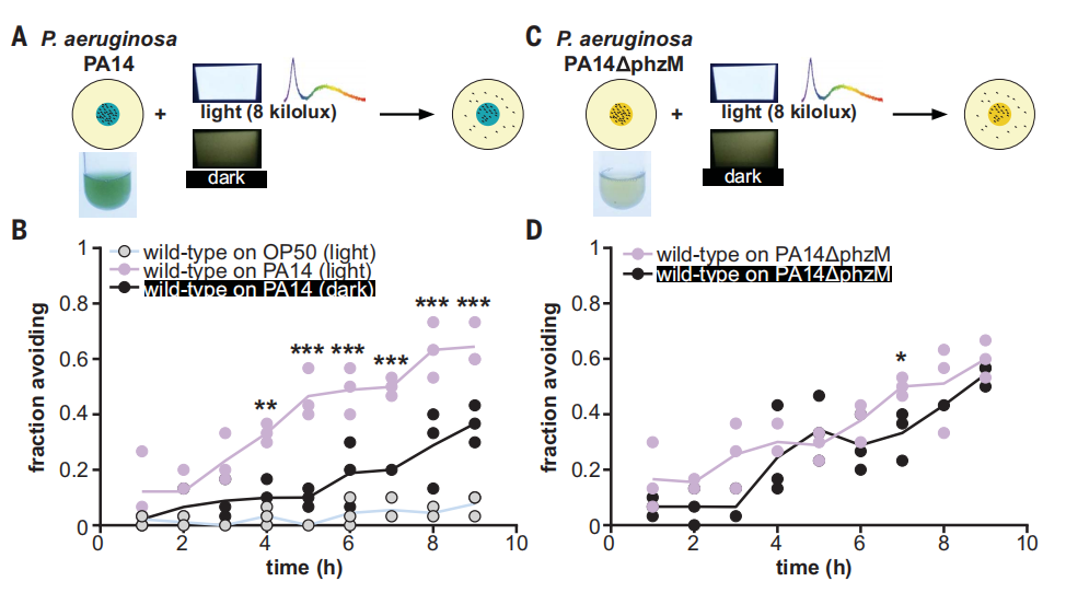"""Color perception in C. elegans - """"seeing"""" light even without eyes"""