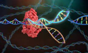 CRISPR-engineered T cells in patients with refractory cancer